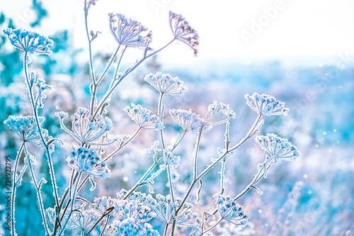 Fotografía  the grass is frozen in frost