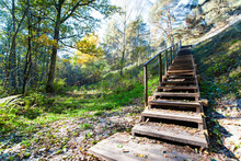 Wooden Staircase In The Forest...