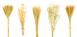 canvas print picture - Set of dry flower bouquet isolated on white background. gramineae grass, bunny tail grass, wheat, gypsophila, Can be used to decorate your design.