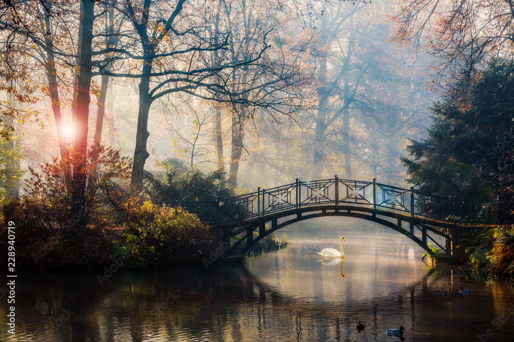 Fototapeta Scenic view of misty autumn landscape with beautiful old bridge with swan on pond in the garden with red maple foliage.