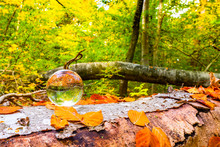 Crystal Ball On A Wooden Log I...