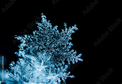 Photo  Beautiful Snowflakes Isolated
