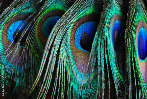 Fond de hotte en verre imprimé Paon plumes de paon