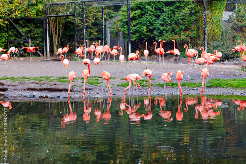Beautiful pink flamingos in bird zoo park in Walsrode, Germany. Interesting park for families, children and school excursion trips.