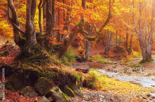 Aluminium Prints Bonsai Yellow autumn trees in mountain park. View on trees and water stream on long exposure.