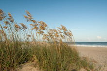 Sea Oats On The Beach