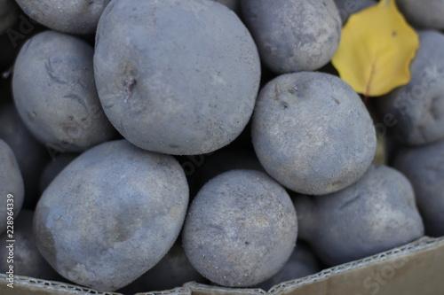 stone, rock, pebble, stones, balance, zen, nature, beach, rocks #228964339