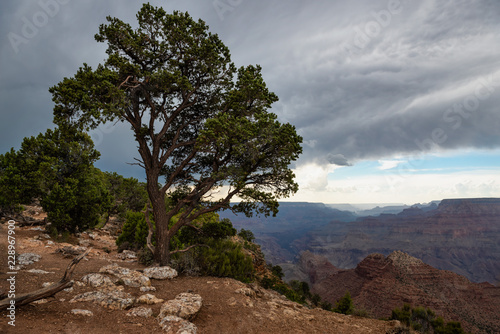 Foto op Canvas Diepbruine tree overlooking canyon in the desert