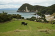 Smugglers Bay - New Zealand