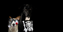 BANNER OF TWO DOGS DRESSED WIT...