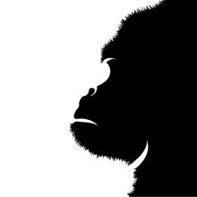 Vector Silhouette Of Gorilla On White Background.