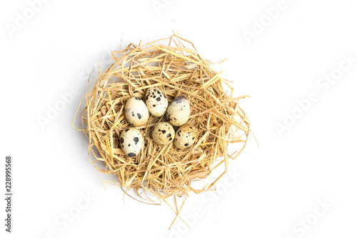 quail eggs in a nest isolated on white background