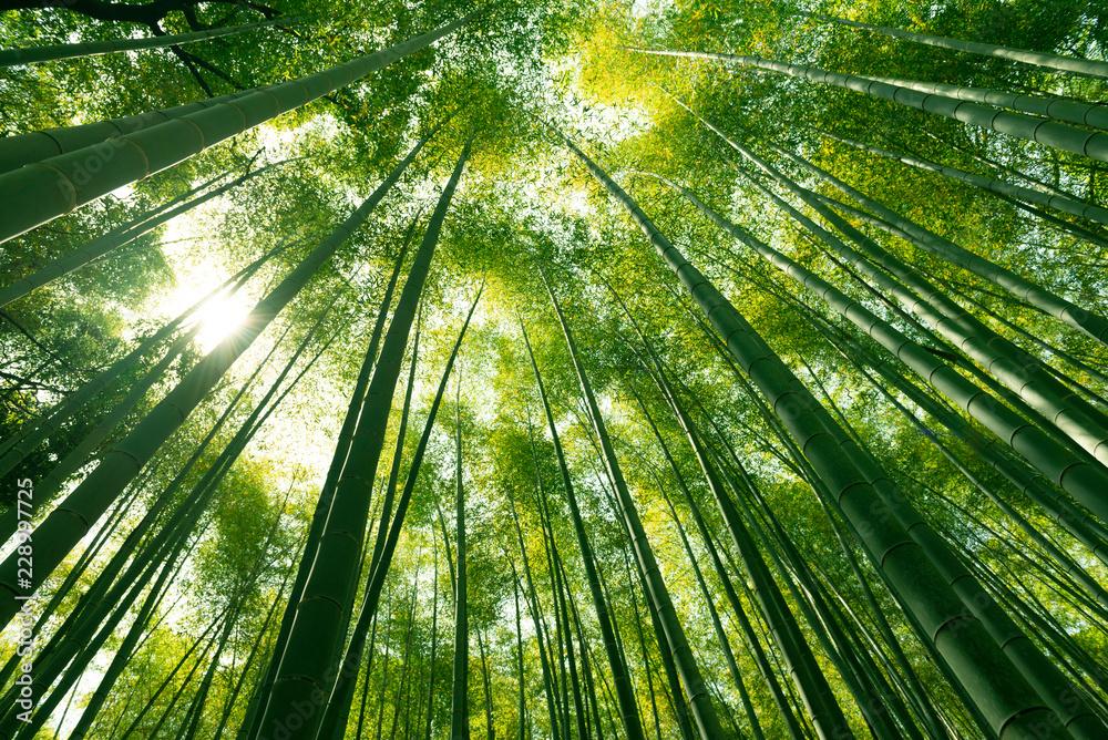 Fototapety, obrazy: Arashiyama bamboo forest in Kyoto, Japan.
