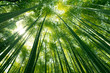 canvas print picture - Arashiyama bamboo forest in Kyoto, Japan.