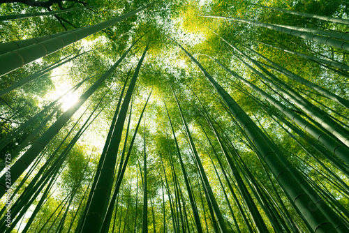 Arashiyama bamboo forest in Kyoto, Japan. Wallpaper Mural