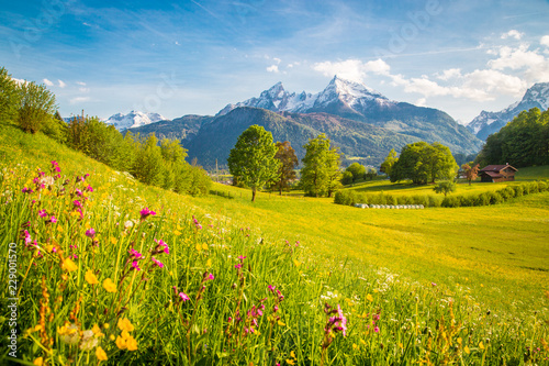 Poster Miel Idyllic mountain scenery in the Alps with blooming meadows in springtime