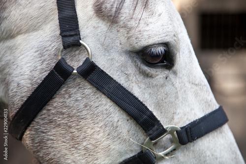 Fotografía  Stunning White Horse Head Full Frame