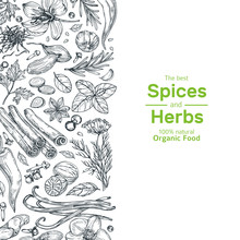 Hand Drawn Herbs And Spices Background. Vintage Organic Indian Kitchen And Asian Spices Vector Cooking Concept. Ingredient For Cooking, Spice And Herb, Rosemary And Cardamom Illustration
