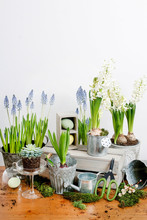 Florist Workplace: Potting Spring Flowers.