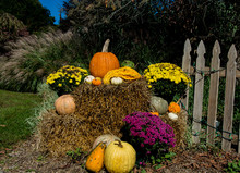 Fall Display/A Festive Fall Display On A Crips October Morning Full Of Colorful Pumpkins, Gourds And Flowers.