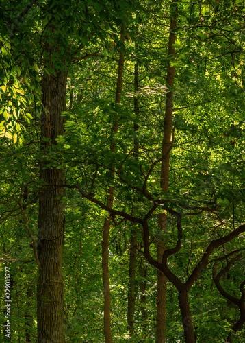 Montage in der Fensternische Grun Dense Jungle Canopy
