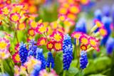 Fototapeta Kwiaty - Kolorowe kwiaty