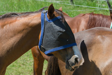 Fly Protection For Horses