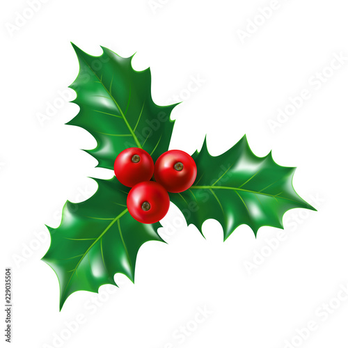 Fototapeta Isolated holly berry with leaves
