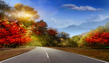 Asphalt Road In Early Autumn With Red And Yellow Leaves