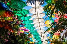 Multicolored Umbrellas Above S...