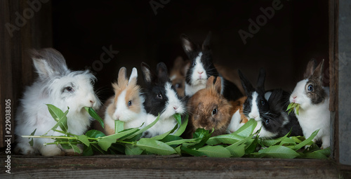 Group of decorative rabbits eating green leaves