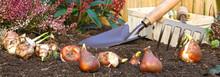 Plantation De Bulbes De Fleurs En Automne