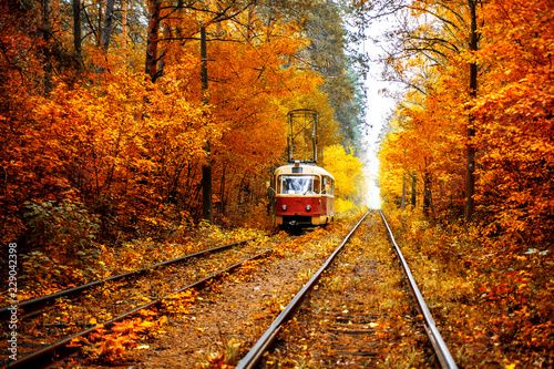 The red tram is racing along the rails through the autumn forest.
