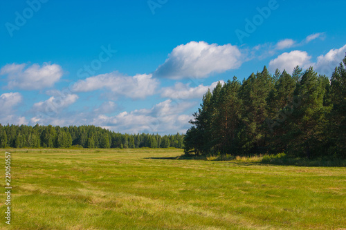 Fotobehang Landschap Yellow field and far away green forest, blue sky in summer day. Magical panoramic landscape place