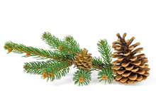 Two Pine Cones With Branch Isolated On A White Background