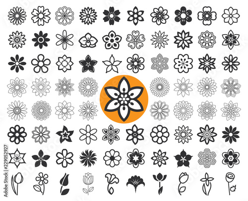 Fotografia Set of flower icons and floral guilloche