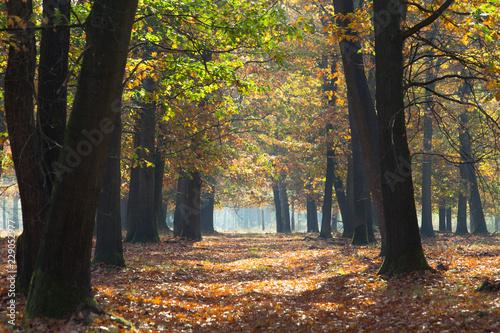 Poster Nature Herfst in het bos, prachtige kleuren zijn te bewonderen