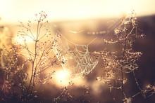 Nature Morning Sunrise Cobwebs Countryside Background  In Retro Vintage Orange Color