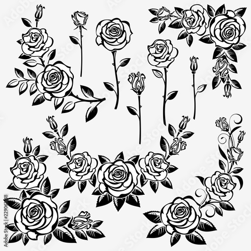 Collection of roses #229063148