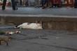 Dormant Cat