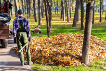 Workers Removing Fallen Leaves In Autumn In City Parl. Seasonal Foliage Cleaning In Fall. Uploading Garbage Into Truck