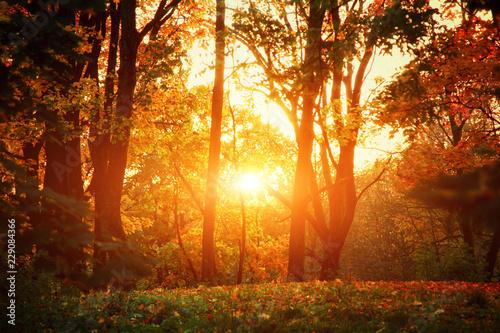 Deurstickers Herfst Goldener Herbst