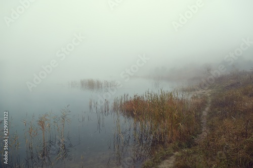 Fog on the lakeside
