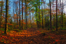 Vibrant Fall Colours In An Ont...