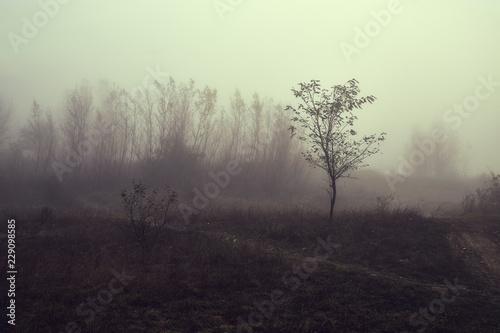 Photo  Haunting foggy landscape