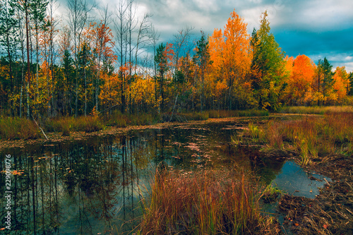 Autumn landscape of the forest on the edge of the swamp