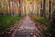 Autumn Boardwalk Covered In Le...
