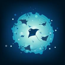 Stingrays In The Ocean.