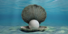 Pearl In An Oyster Shell Underwater, On The Seabed. 3d Illustration