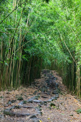 Foto op Plexiglas Bamboe Hawaiian Bamboo Forest, Maui